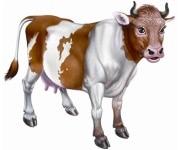 Фуражи за телета и крави