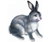 Фуражи за зайци и малки зайчета