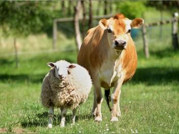 селскостопански животни